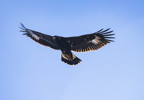 Lower Klamath Bird of Prey, Siskiyou