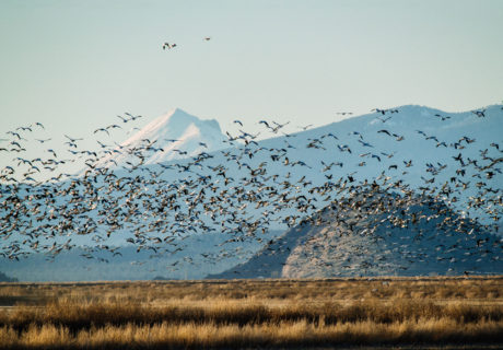 Lower Klamath Wildlife Refuge