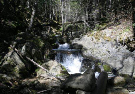 Root Creek, PCT, Dunsmuir